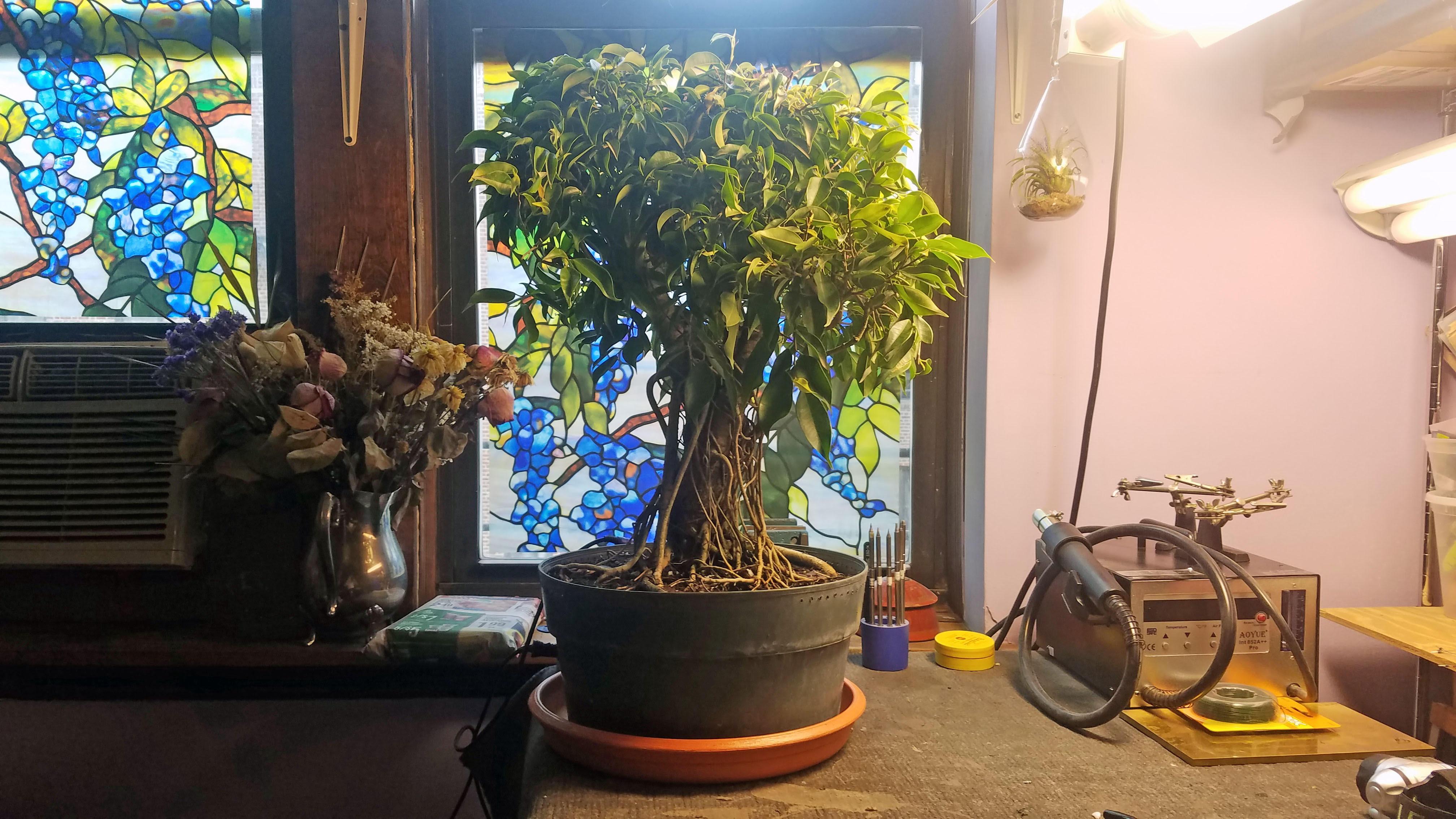 starting tree