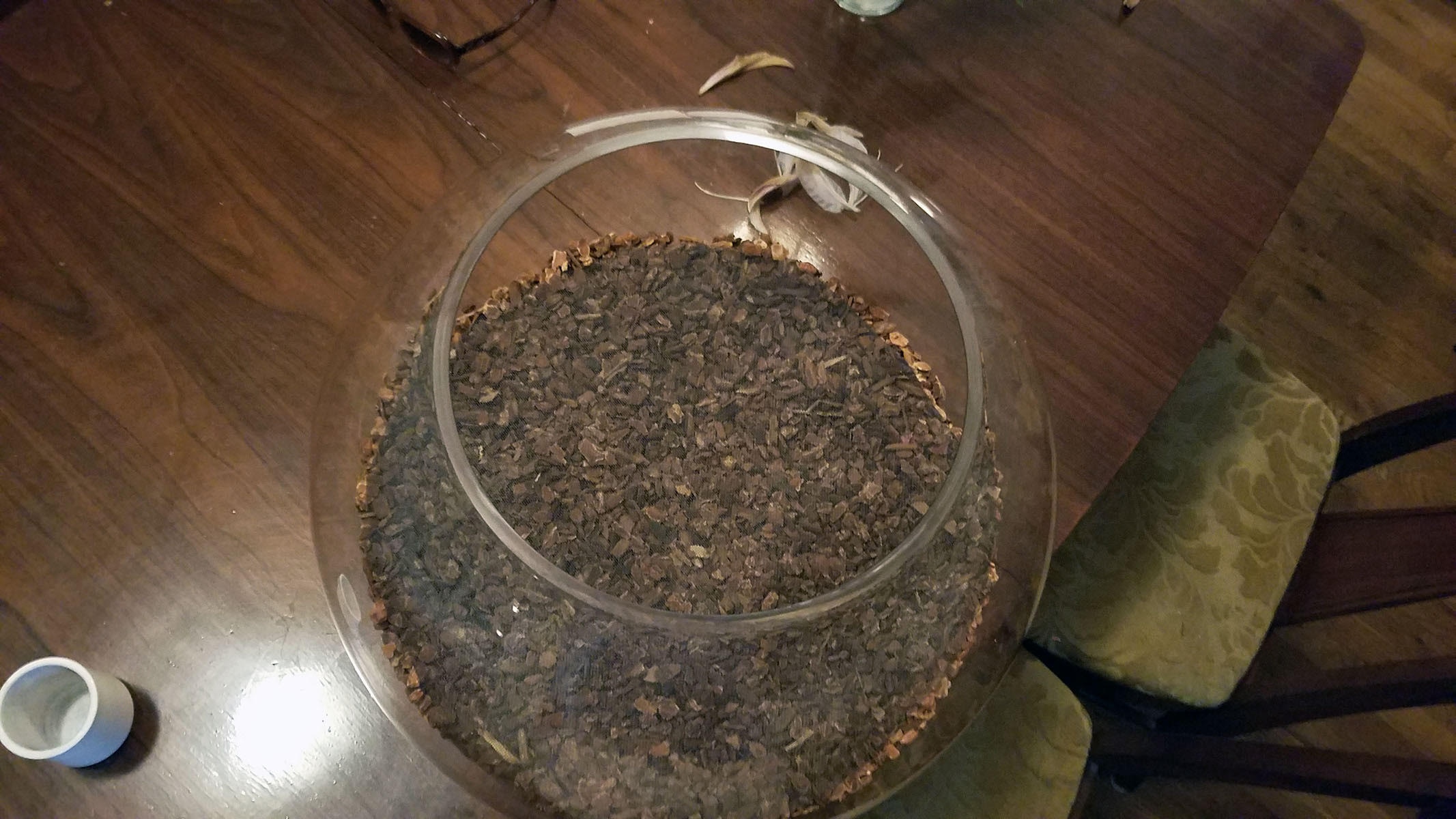 terrarium media bark top