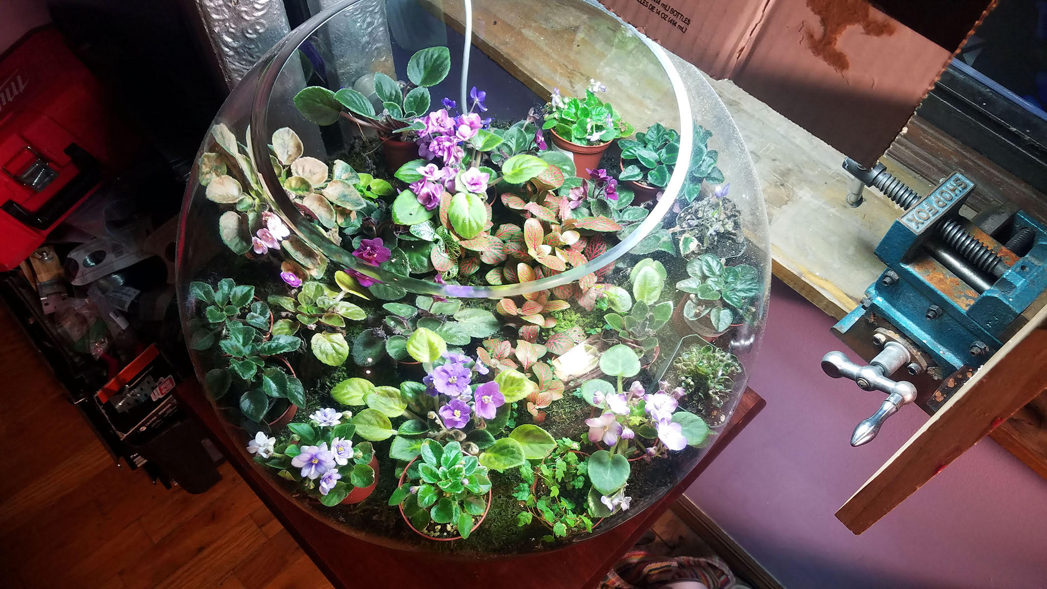 terrarium temporary flowers