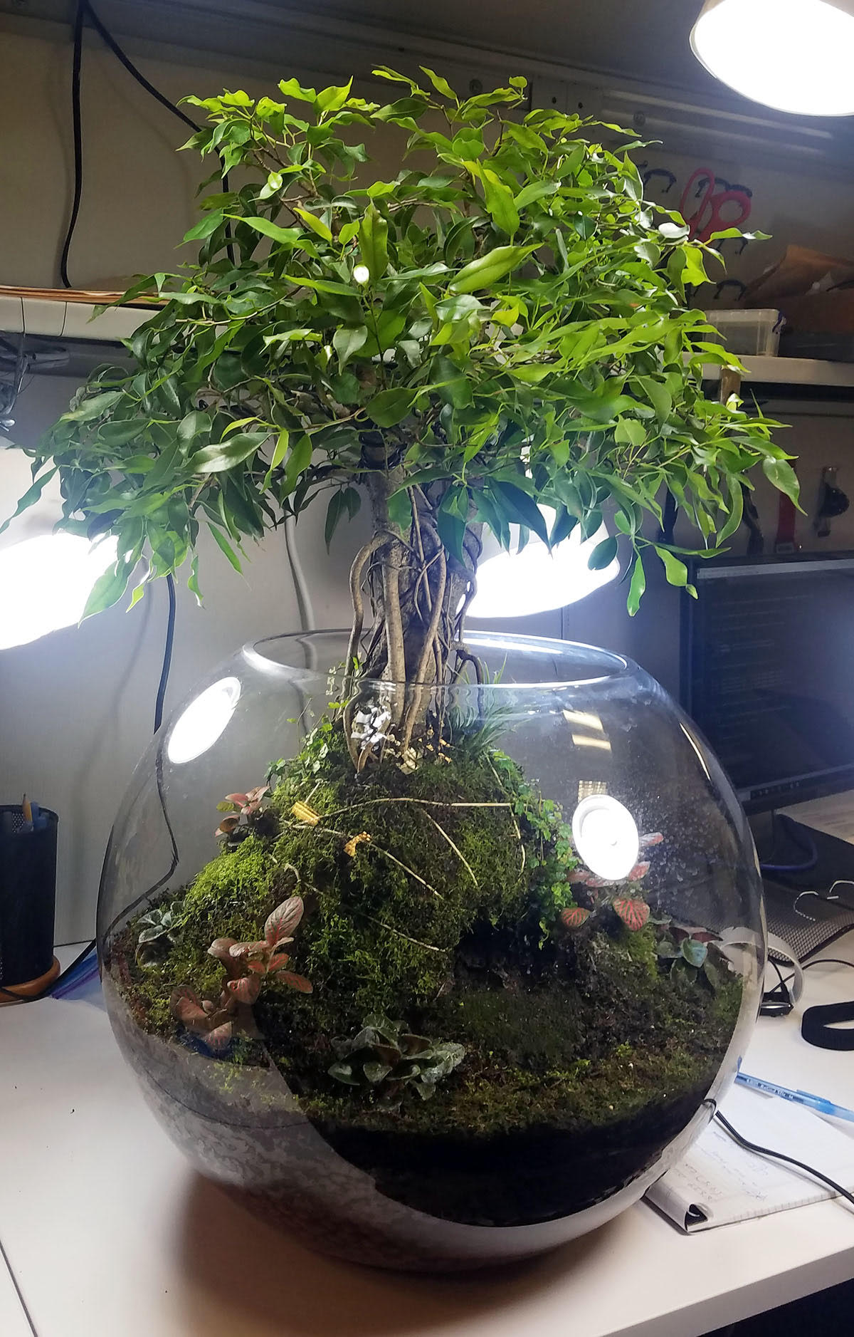 finished terrarium 2